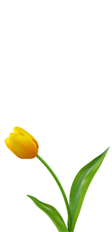 flower-tulip-yellow-right